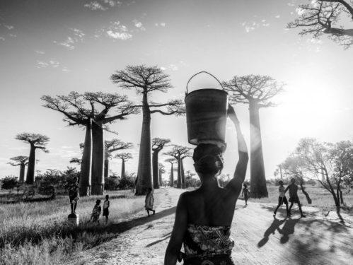 Baobabs - n° 1/15, Tirage sur papier Fine Art Baryta Hahnemühle, 30 x 45 cm. © Galerie Capazza